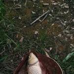 ——致为钓鱼奉献青春的兄弟