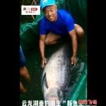 云龙湖168市斤记录